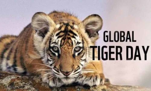 Download International Tiger Day wishes images