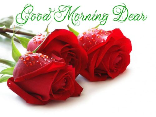 Good Morning Sunday Red Rose Images