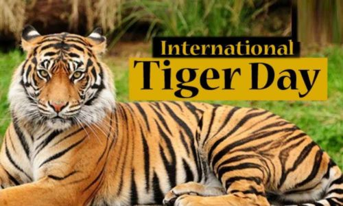 Happy International Tiger Day 2020 images