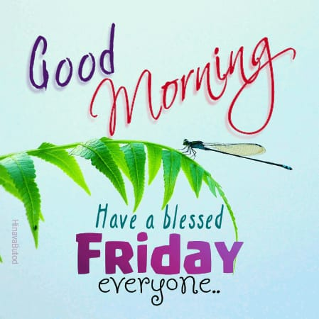 Download Beautiful Good Morning Friday wishes images