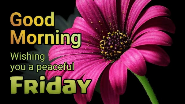 Good Morning Friday wishes flower images