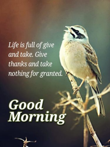 Good Morning Saturday Wishes Quotes with Nature Background images