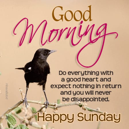 Happy Good Morning quotes photos in English