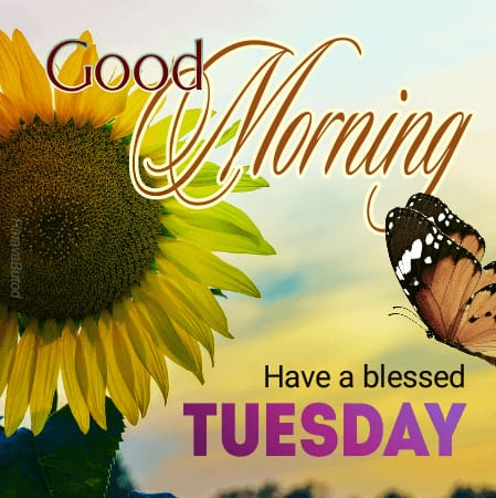 Happy Tuesday morning wishes images
