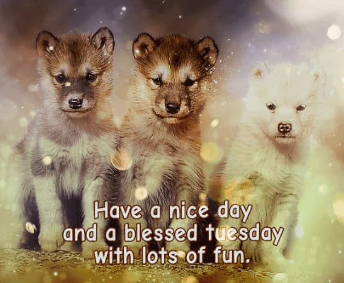 Good morning Tuesday greeting images with quotes