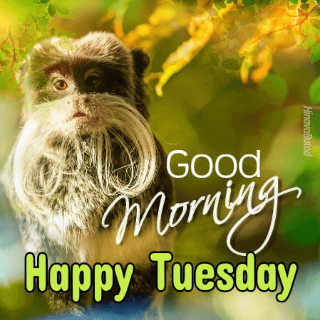 Download Good morning wishes images