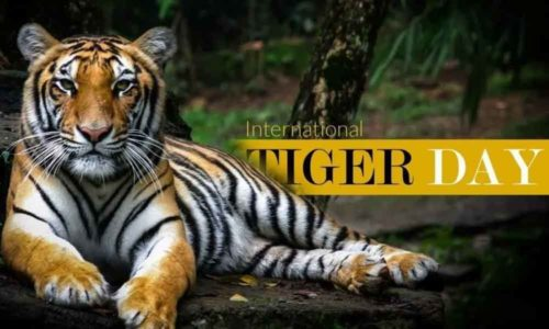 International Tiger Day 2020 wishes images