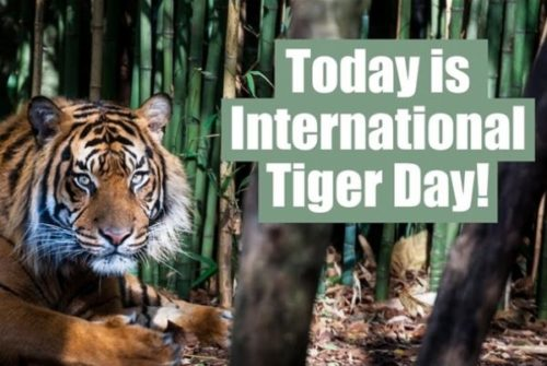 International Tiger Day wishes images for status