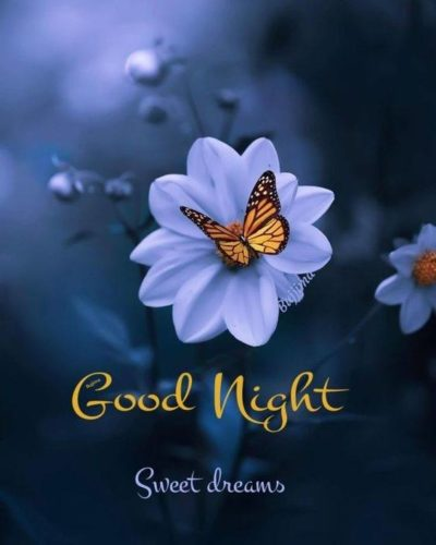Good Night wishes images for status