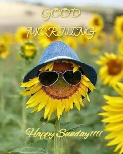 Good Morning Happy Sunday images for Instagram status