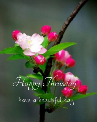 Beautiful Good Morning Thursday Quotes images