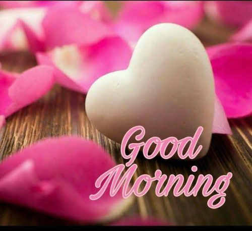 Good Morning My Love greeting images