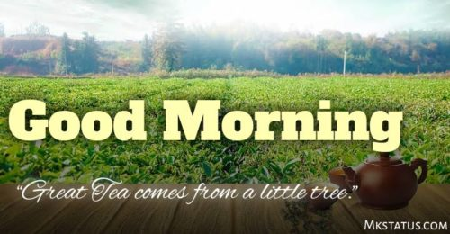 Beautiful Good Morning Tea Wishes Images with quotes