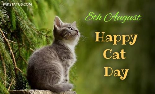 Cat Day greeting images for status