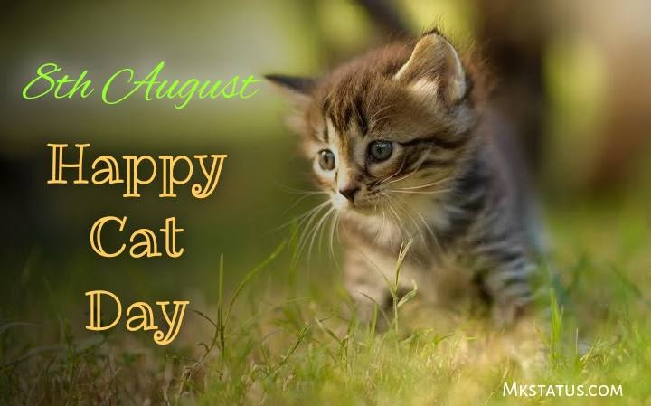 Latest 2020 Happy Cat Day wishes images