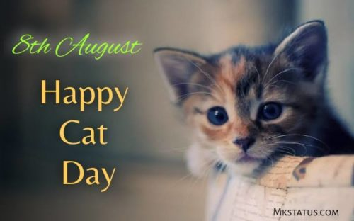 Download 2020 Happy Cat Day wishes images