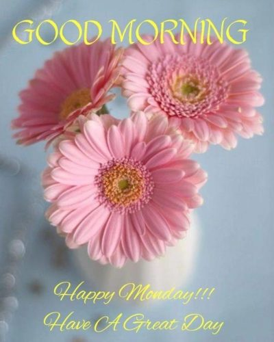 Beautiful Flowers wishes Good Morning Monday images