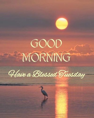 Good Morning Tuesday images Have a Nice Day