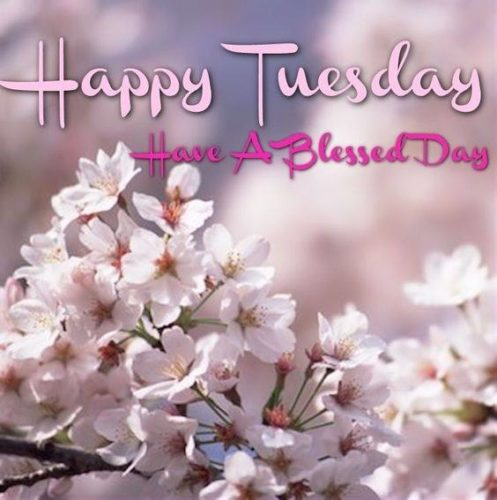 Happy Tuesday Good Morning Wishes pictures