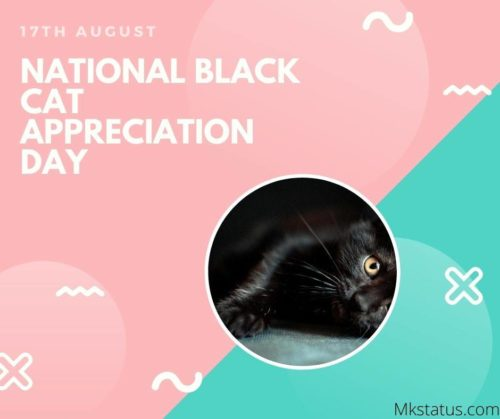 National Black Cat Appreciation Day wishes images 17th August