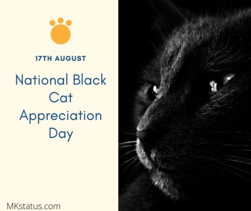 National Black Cat Appreciation Day wishes photos