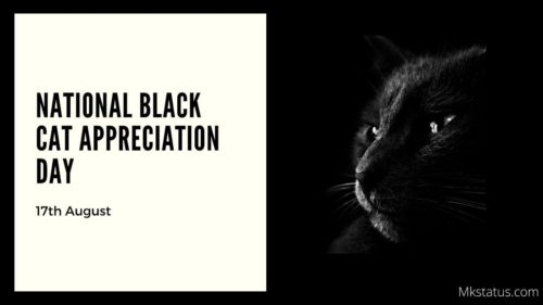 National Black Cat Appreciation Day wishes images