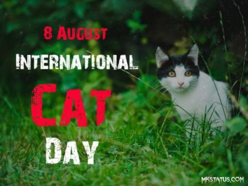 Happy Cat Day 2020 wishes images