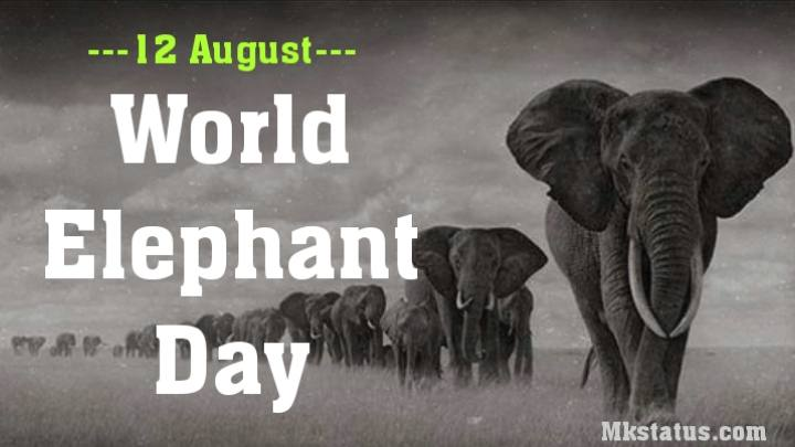 World Elephant Day 2020 wishes images for status
