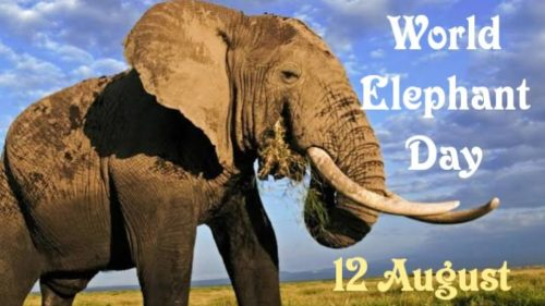 World Elephant Day 2020 wishes images | 12 August