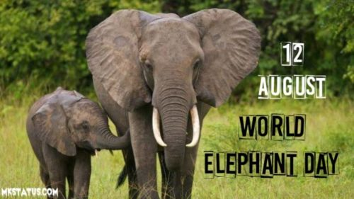 Latest 2020 World Elephant Day greeting pictures