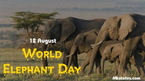 World Elephant Day greeting pictures