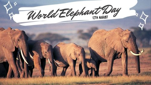 World Elephant Day 2020 Wishes Images