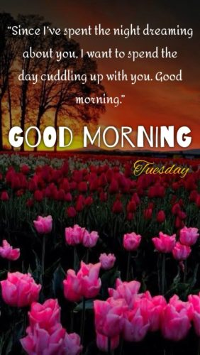 Tuesday Quotes for wishing Good Morning