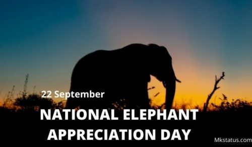 NATIONAL ELEPHANT APPRECIATION DAY wishes images