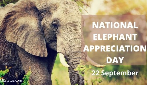 NATIONAL ELEPHANT APPRECIATION DAY greeting images