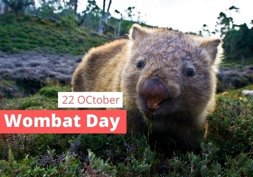 Wombat Day images