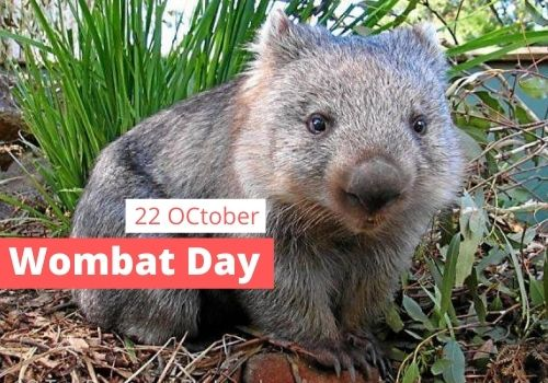 Wombat Day 2020 images