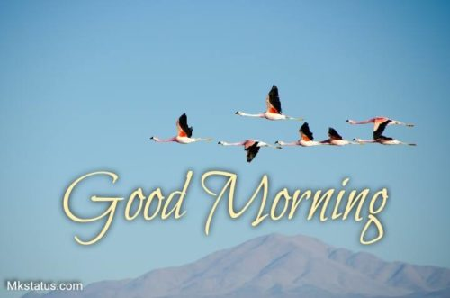 Birds Good morning images