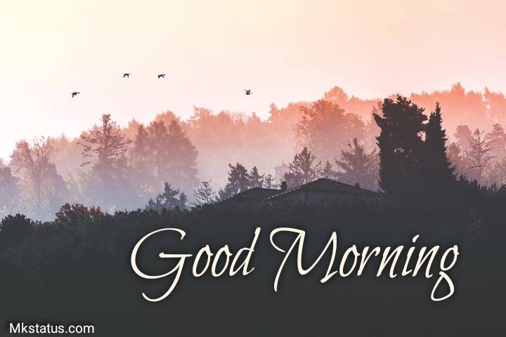 Best Good morning Birds photos for Facebook