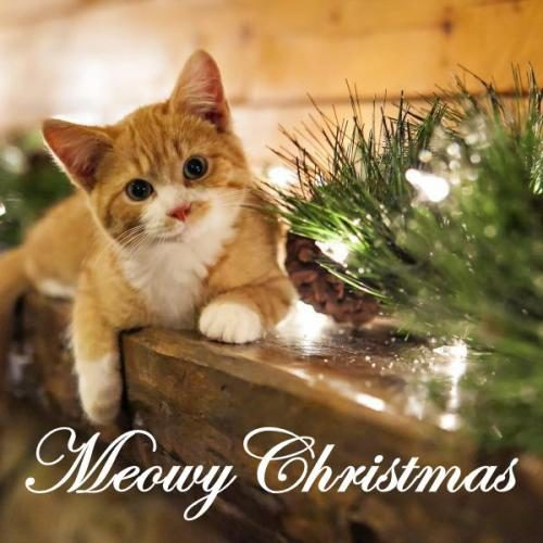 Lovely Merry Christmas wishes images