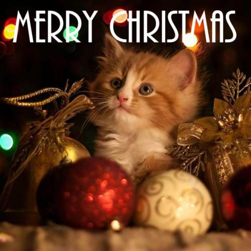 Best Merry Christmas wishes images