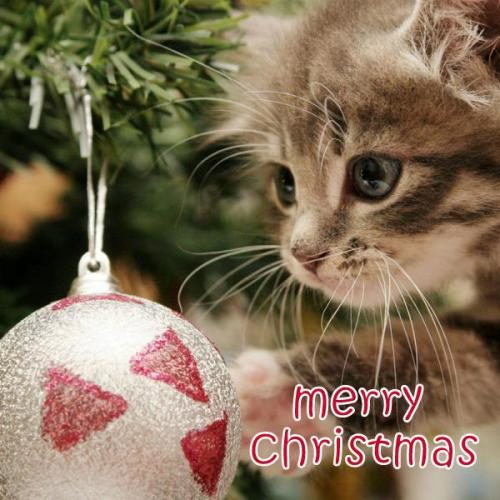 Merry Christmas blessing images