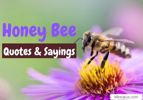 Honey Bee Quotes & Sayings